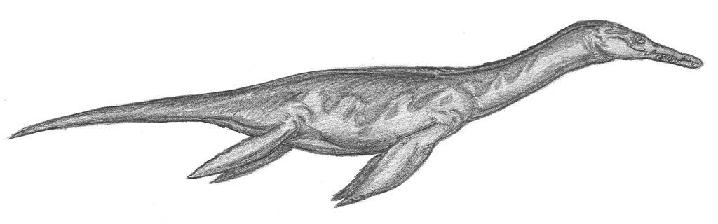 Rhomaleosaurus cramptoni by EmperorDinobot