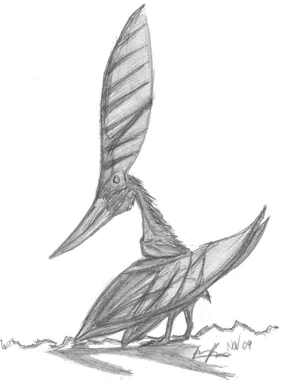 Nyctosaurus by EmperorDinobot