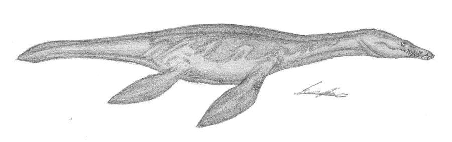 Rhomaleosaurus cramptoni II