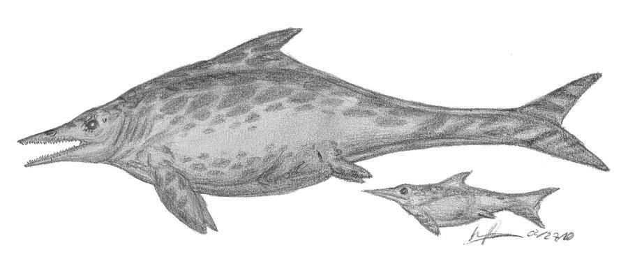 Stenopterygius quadriassicus by EmperorDinobot