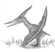 Pteranodon longiceps by EmperorDinobot