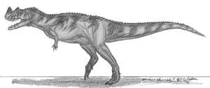 Ceratosaurus nasicornis by EmperorDinobot