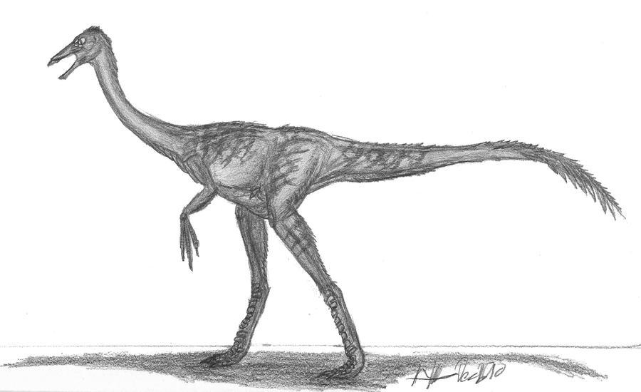 Ornithomimus velox by EmperorDinobot