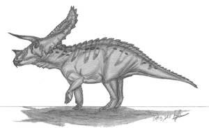 Torosaurus latus by EmperorDinobot