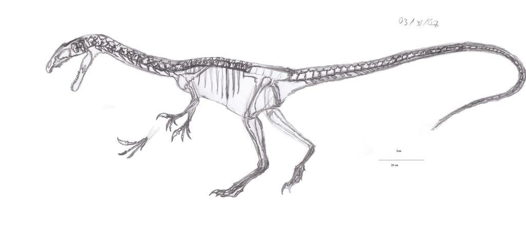 Noasaurus leali skeletal by EmperorDinobot