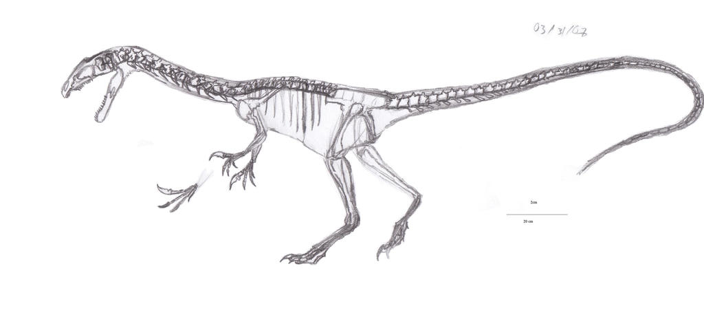 Noasaurus leali skeletal