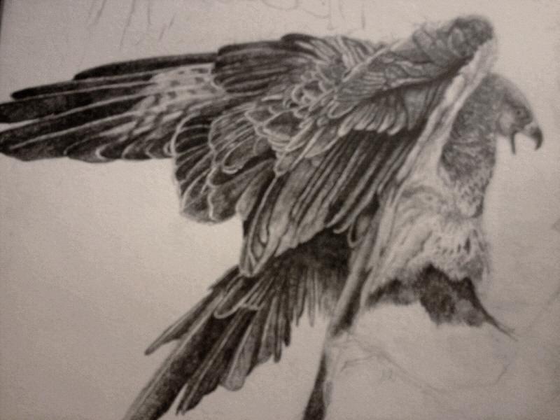 Bird Detail Sketch by Lykouros