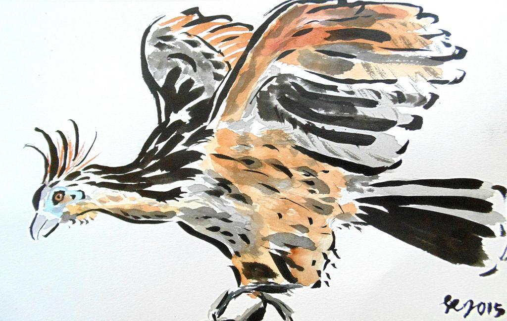 hoatzin sumi e painting study by ren ou on deviantart
