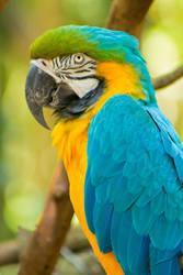 Parrot #2 by psychosilence