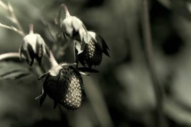 strawberries 2 by ivoryacidlust