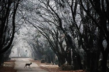 Fairy road