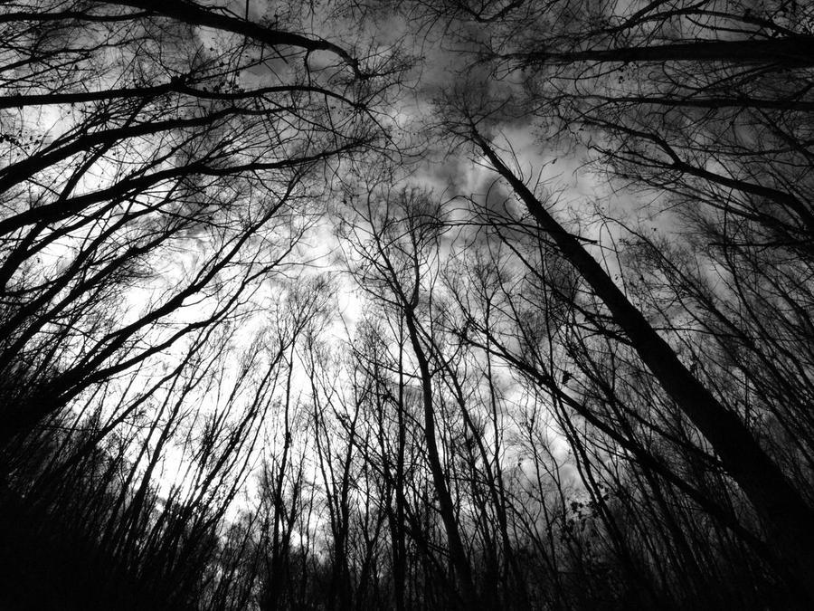 eye of the woods