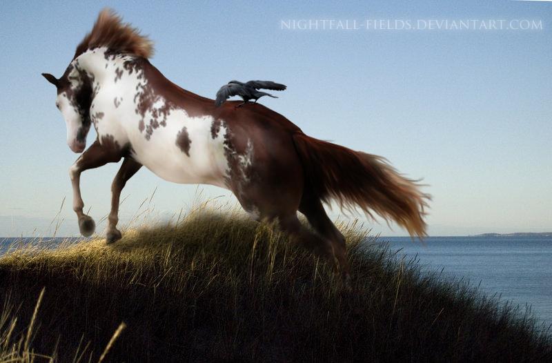 My Rider by Nightfall-Fields