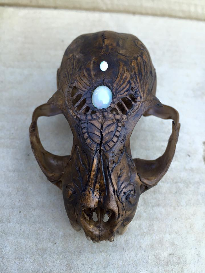 Carved Bobcat Skull by MagicallyCapricious