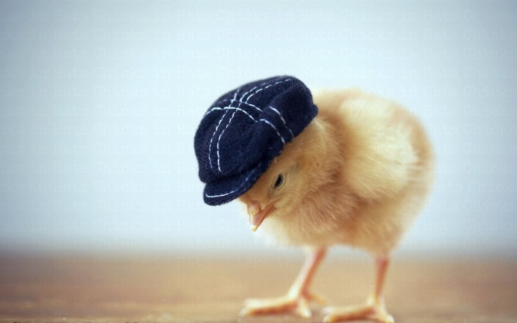 Marty Mittelman Cute Chicken Baby By Martymittelman On