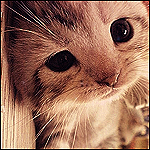 Avatar - Cat by remixinjsh