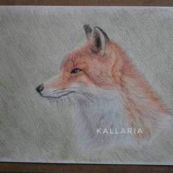 Fox by Kallaria