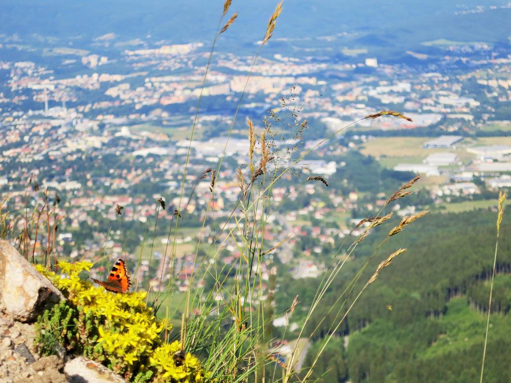 View by Akuma-de-soro