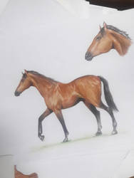 its a horse by Milk-Addicc