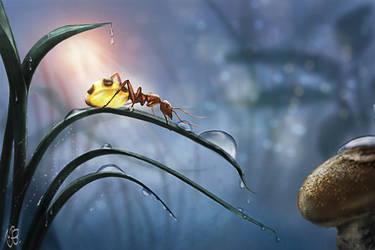 Honeypot ant after rain