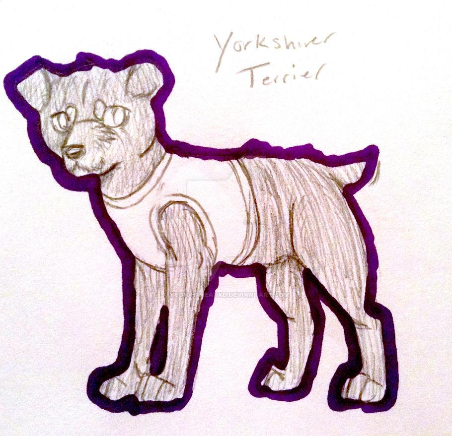 Yorkie! by yugiohfreakXD
