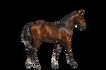 Pre cut Foal