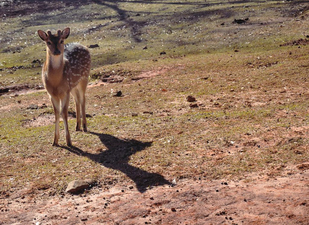 Bambi :3 by Meital-H