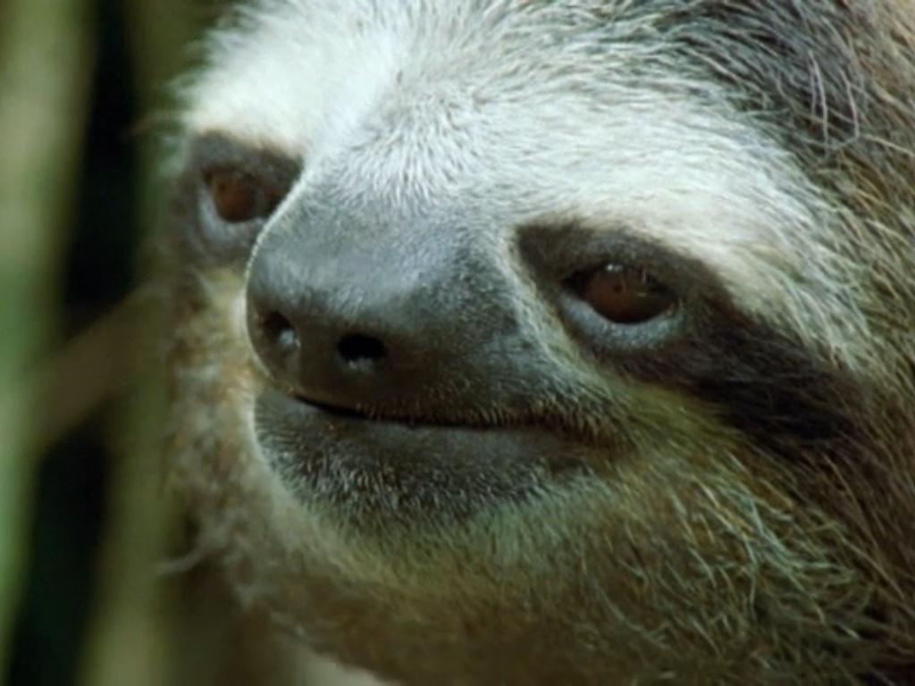 http://orig15.deviantart.net/91ee/f/2013/192/f/2/sloth_face_by_velociraptort_rex-d6d0zk8.jpg