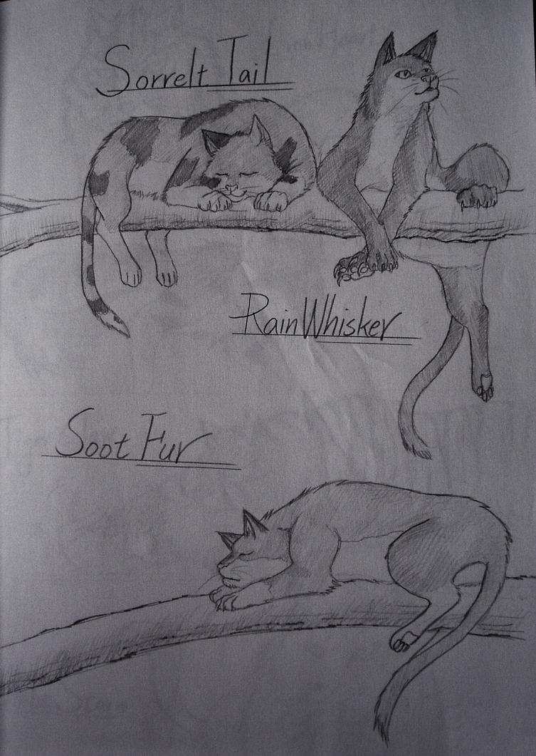 Sorrelttail, Rainwhisker and Sootfur by Marshcold