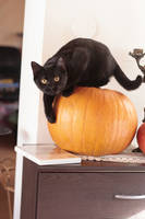 Halloween 2 by MoraNox-Stock