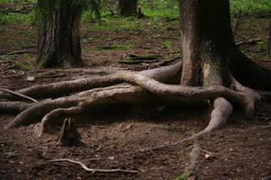 Nature 1 by MoraNox-Stock