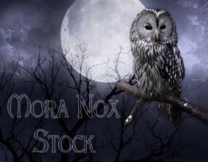 MoraNox-Stock's Profile Picture