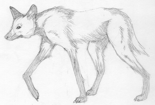 How To Draw A Maned Wolf: Maned Wolf By Xxblackandwitexx On DeviantART