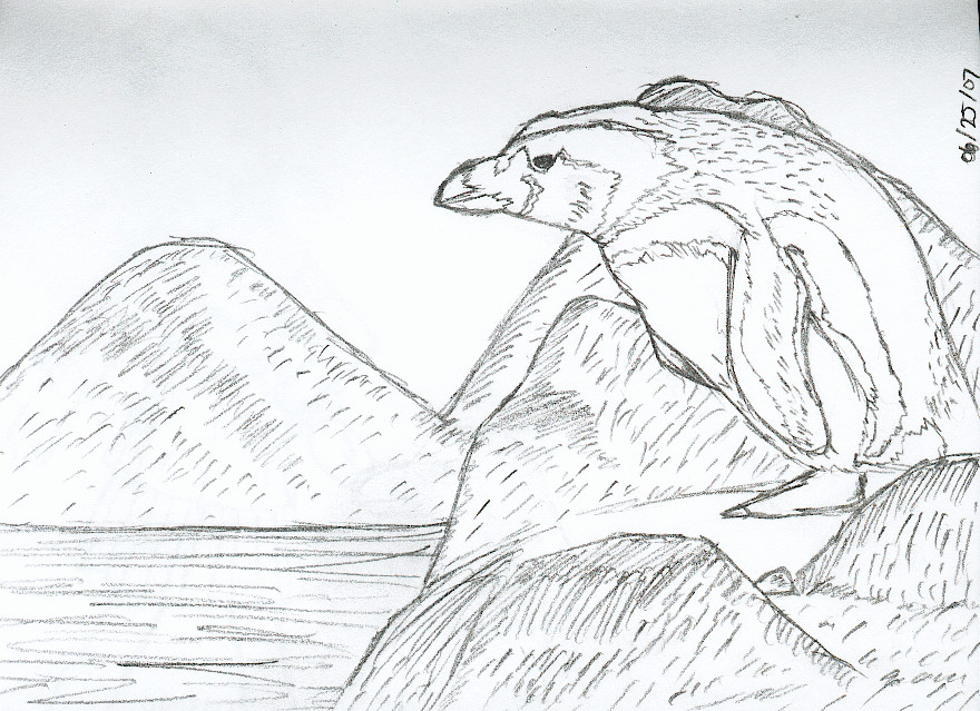 How To Draw Galapagos Penguin  Apps Directories