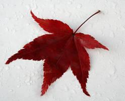 Fallen Leaf by Little-Dreamer