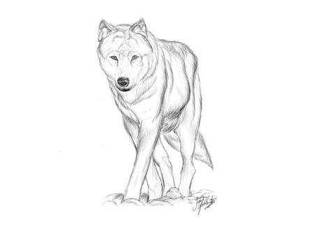 wolf commission sketch