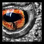 Daemon's Eye