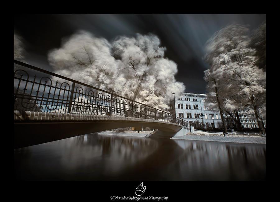 ...Bydgoszcz 40... by canismaioris