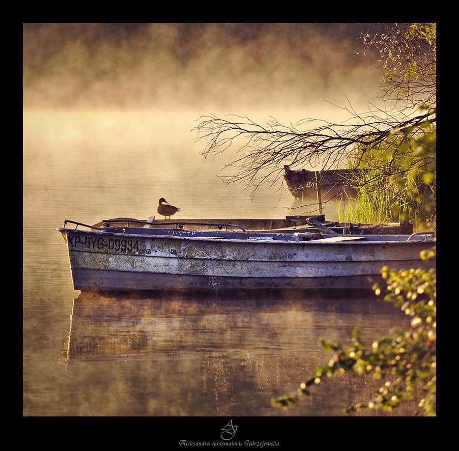 ...foggy... by canismaioris