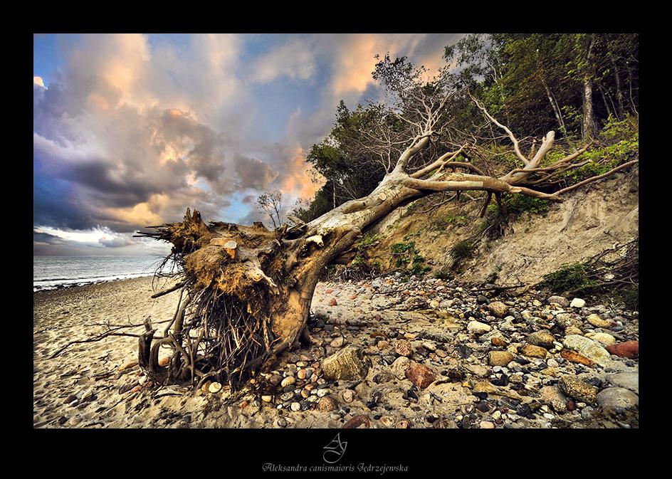 ...Cape Rozewie... by canismaioris