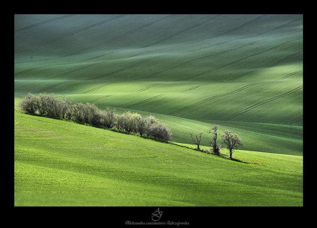 ...Moravske toskansko... by canismaioris