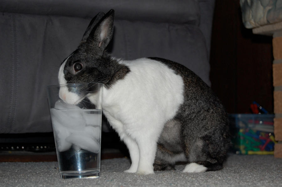 Thirsty Bun Bun by AKA-M80-TheWolf