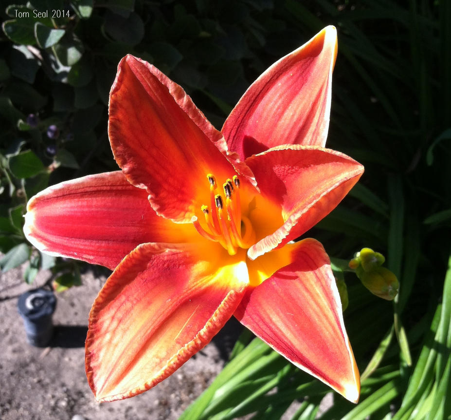 Flower2 on camera phone. by decophoto32