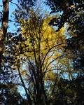 Fall awaken