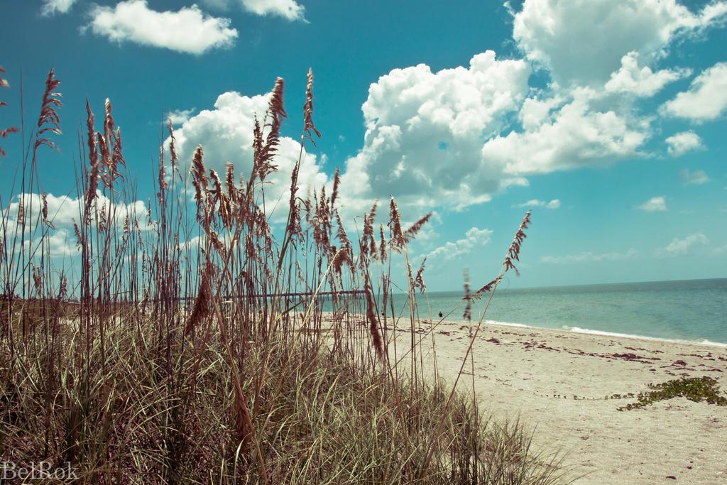 Summer Memories By Shane Morelock ...