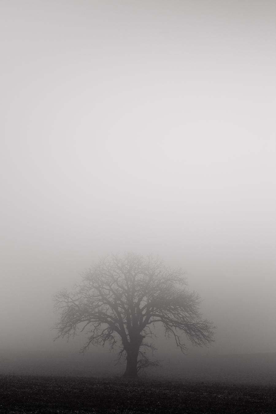 Winter Fog by Shane-Morelock