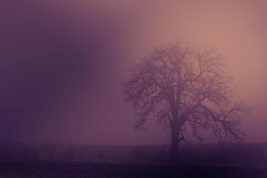Winter Fog II by Shane-Morelock