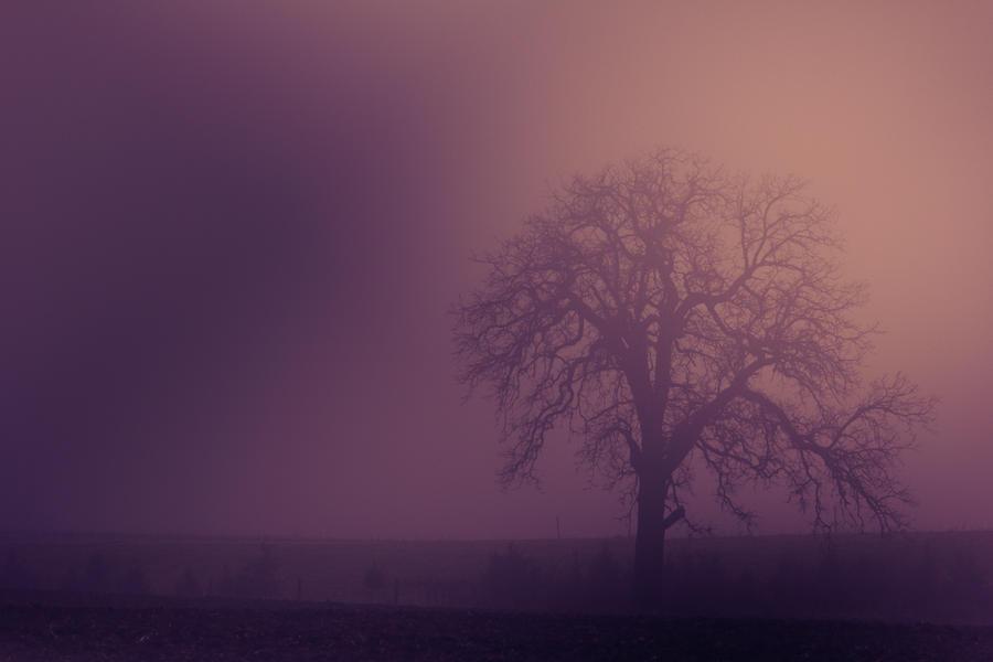 Winter Fog II by Shane-Morelock