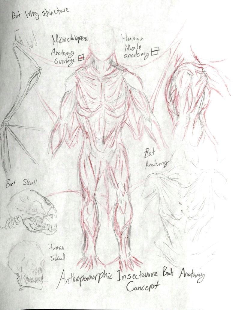 Anthro Bat (Microchiroptera) Anatomy by Taqresu650