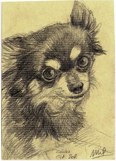 Chihuahua Portrait III by honeymil